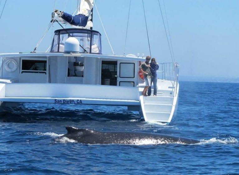 San Diego Yacht Rentals 60' Catamaran Whale Watching